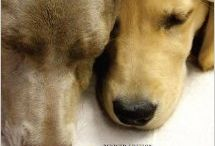 Grief Management / Books, resources and helpful things for managing the loss of a beloved companion.
