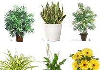 Airpurifying house plants