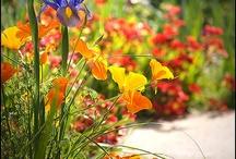 gardening / by Courtney Cox