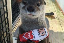 Otterly lovely