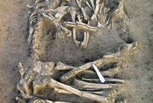 Archaeology / Paleontology/ Fossil's / fossils, stones, artifacts, humanoid