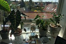 Tropis window / Tropis plante
