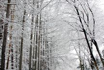 Winter wallpaper / Winter photography. Winter inspiration. Wallpaper for android. Application .
