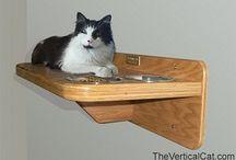 Cat Misc