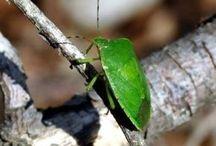 rimedi contro insetti