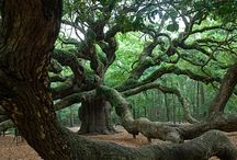 Foto: Bäume & Landschaften