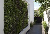 House + garden