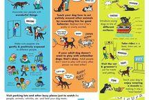 Pug Dog Tips
