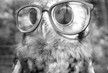 Owles / by Ashtyn Alabbasi