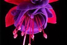 Favorite Flora & Fauna