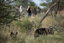 Activities for visitors at AfriCat
