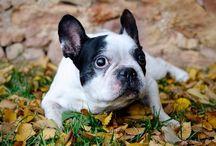 Love mascotas / Porque no hay amor más incondicional que el de tu mascota, este tablero es para todas aquellas personas que consideran que su mascota es su amigo y su família.