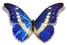 >< Butterfly ><