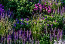 Flowers&Garden