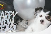 Pets New Year Celebration.... / As Humans, pets also celebrate the occasion, parties etc..Lets see how they have celebrated New Year..