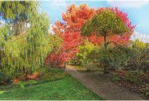 les jardins de Beauchamp un bel endroit pour vos photo de couple et ou de mariés