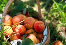 Peaches / by Lois Pressler