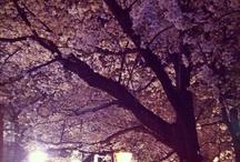 Tokyo walk.