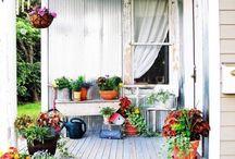 pretty plants / plants   flowers   garden   garden life   grow   seeds   vegetables  