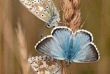 Nature Beauties