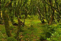 fougere, mousse, arbre .................
