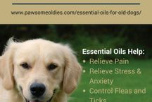 Aromatherapy for Old Dogs / Posts and tips on how to use aromatherapy, such as essential oils, hydrosols, herbal oils, etc. to help enhance the health and wellbeing of old dogs.