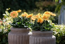 Flower Pots by Others / A wide assortment of container combos that I have found thru pinterest, that were created by others. Contact Violanursery.com if you see something that you would like to create at your home. / by Viola Nursery and Greenhouse