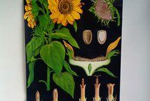 Vintage Botanical Charts