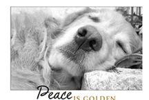 Goldens / by Dana Tolbert