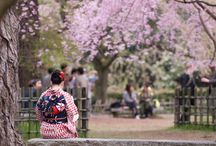 Japan Dream / by Julie Kuwabara