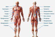 Упражнения / Техника выполнения фитнес упражнений