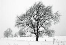 Tél / Winter