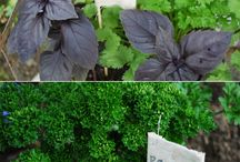 Everything with Herbs / All about Herbs: From Growing how to's to yummy marinades!