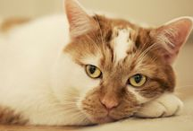 Cat Articles from The Vet / Informative articles from your veterinarian so your feline companion can live a happy and healthy life. / by Ridgewood Veterinary Hospital