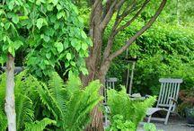 Dreamgarden / Vackra trädgårdsmiljöer