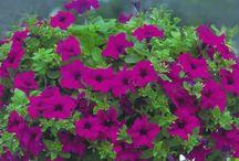 Fiori e piante esterno