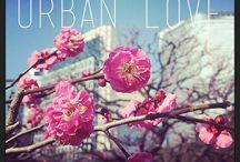 Local Mission - Urban Love / This month we're declaring our love for the cities of the world - whether a long lost hometown love, passionate layover love affair, or a city we've been crushing on and can't wait to visit.  / by Urban Adventures