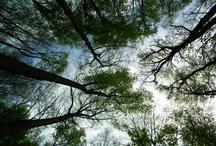 Trees!! / by Jennifer Ross