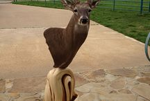 Custom Taxidermy Pedestal Bases / Custom Made Taxidermy Pedestal Bases for deer, bear, moose, exotic, shoulder, floor and wall mounts. Inlaid with turquoise and made from twisted juniper