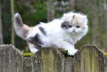 Kattunger / Her er bare kattunger som jeg har funnet.❤️❤️❤️