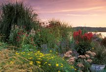 Grow, Don't Mow! / Replace your grass with Wildflowers and forget about the hassle of mowing! / by American Meadows