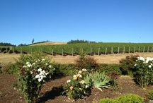 Wine Country Willamette Favorites / Select favorites places to go in the Willamette Valley Wine region in Oregon. My favorites for a blend of beautiful views and good wines. / by Cindy Anderson