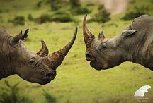 Wildlife Blog