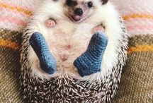 Now I have seen everything -  knitted stuff on animals