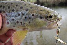 Connaissance Pêche / Apprenez la pêche et perfectionnez vos talents.