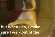 Funny pics!