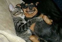DOGS AND CATS LIVING TOGETHER, MASS HYSTERIA! / by Nikki Mioduszewski