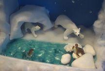 Tundra and Rainforest Dioramas