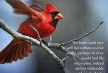 Birding Life