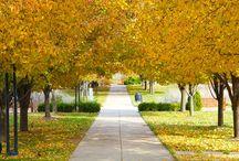 Color Me an Ozark Autumn / Fall colors in southwest Missouri